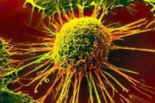 سرطان زدایی با غذا